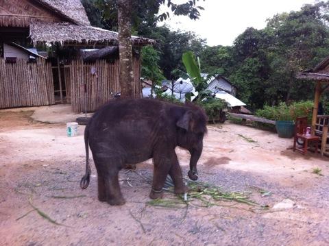 小象 プーケット