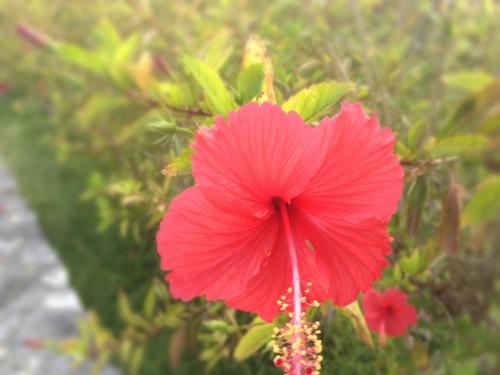 沖縄の奥「おくなわ」のプロジェクトで沖縄の離島に着ています。