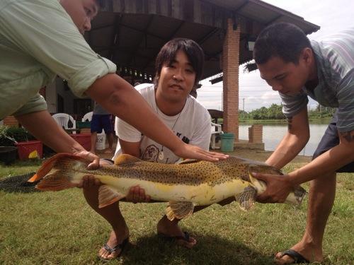 巨大魚釣りにタイの田舎に来ました | 4日目 #ブログ観光大使
