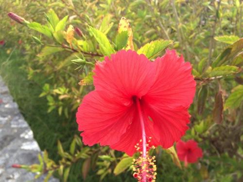 沖縄のバス・モノレールに共通ICカードが導入される。沖縄在住の僕の感想。