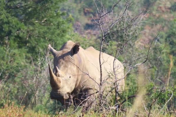 南アフリカの観光 サファリ・ピラネスバーグ国立公園に行ってきた